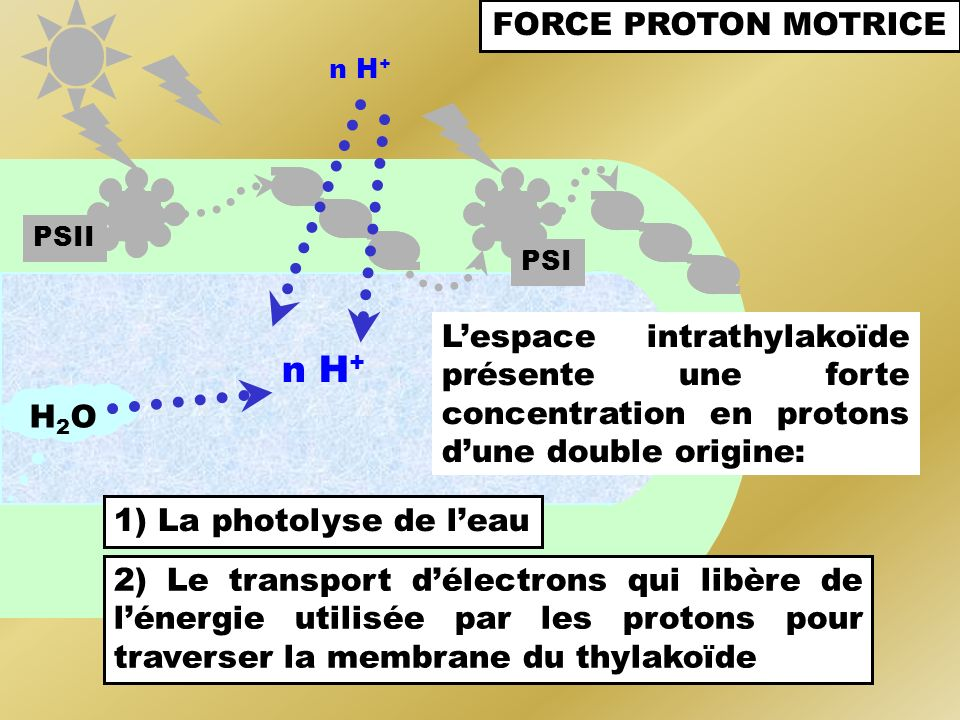 n H+ FORCE PROTON MOTRICE