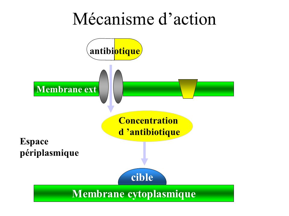 Membrane cytoplasmique