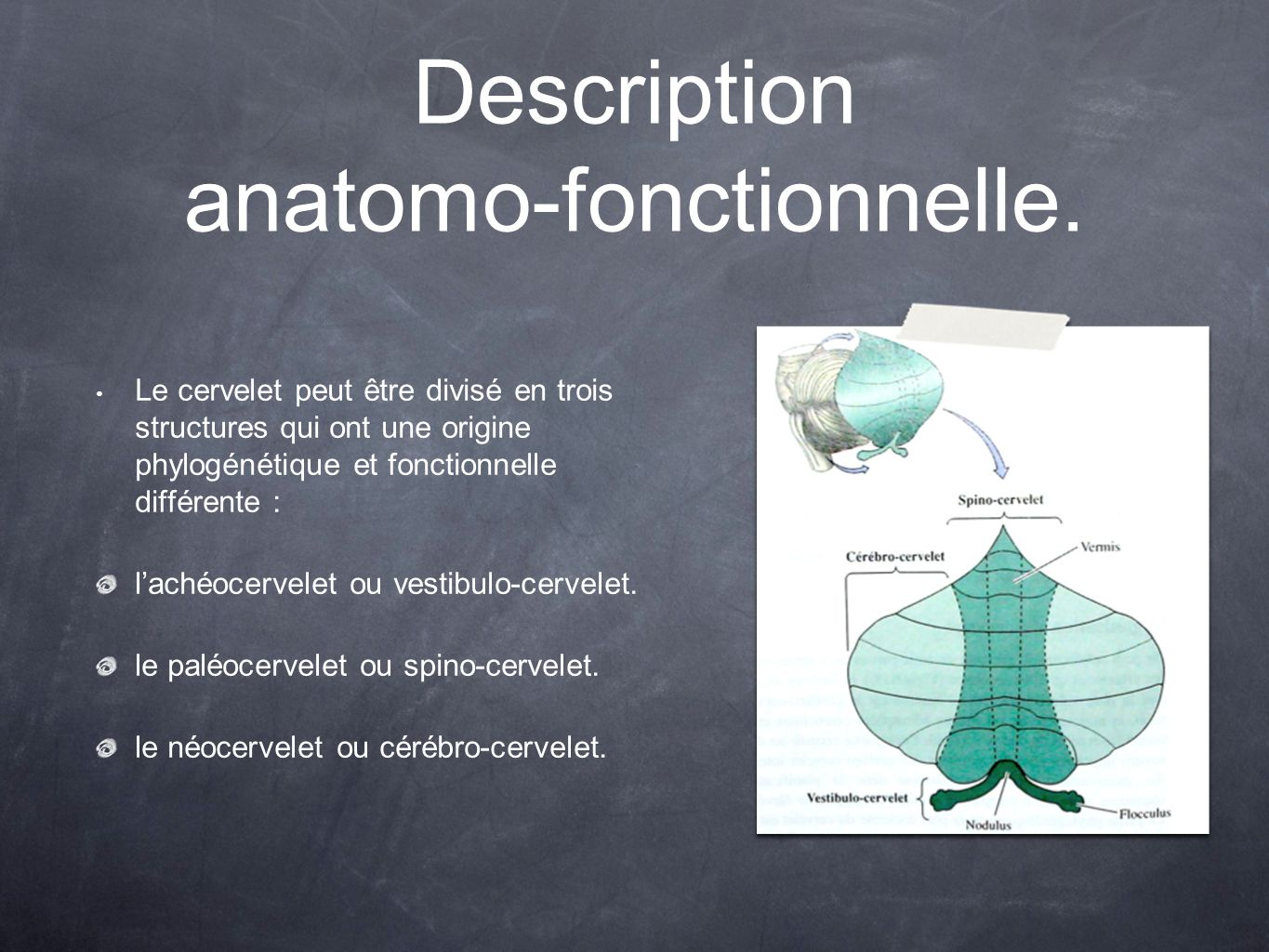 Description anatomo-fonctionnelle.