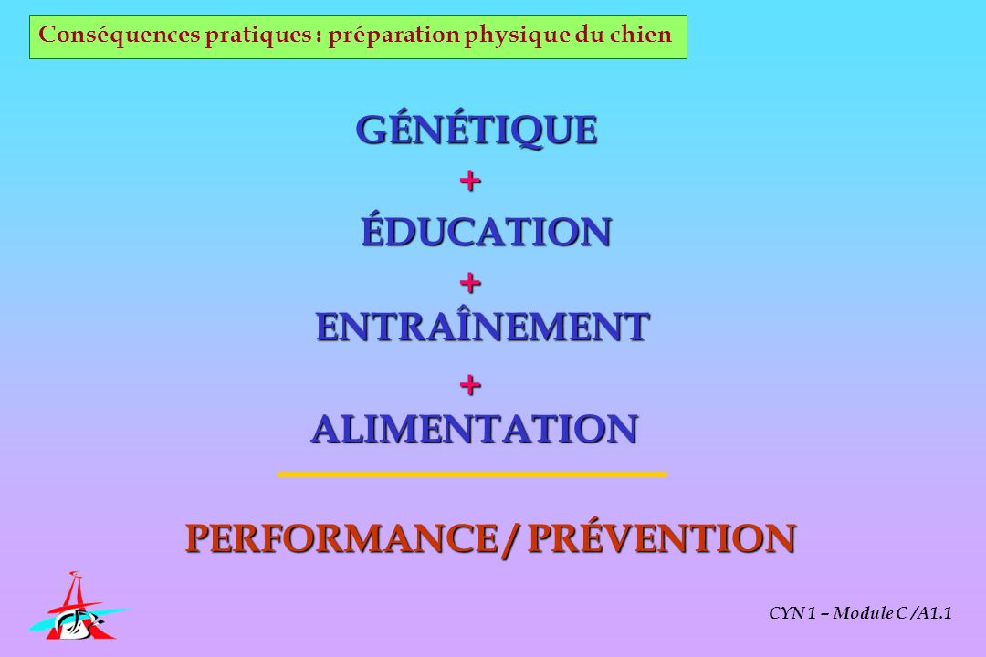 PERFORMANCE / PRÉVENTION