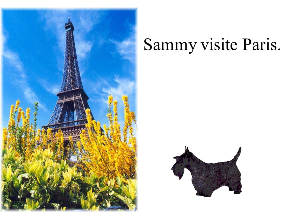 Sammy visite Paris.