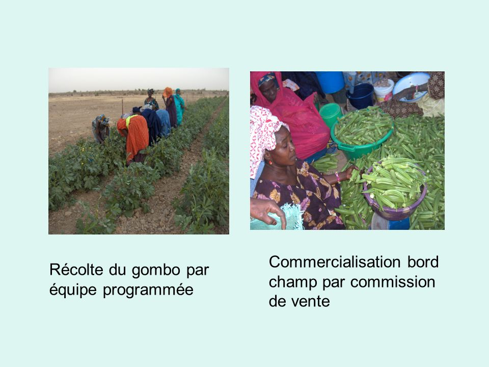 Commercialisation bord champ par commission de vente