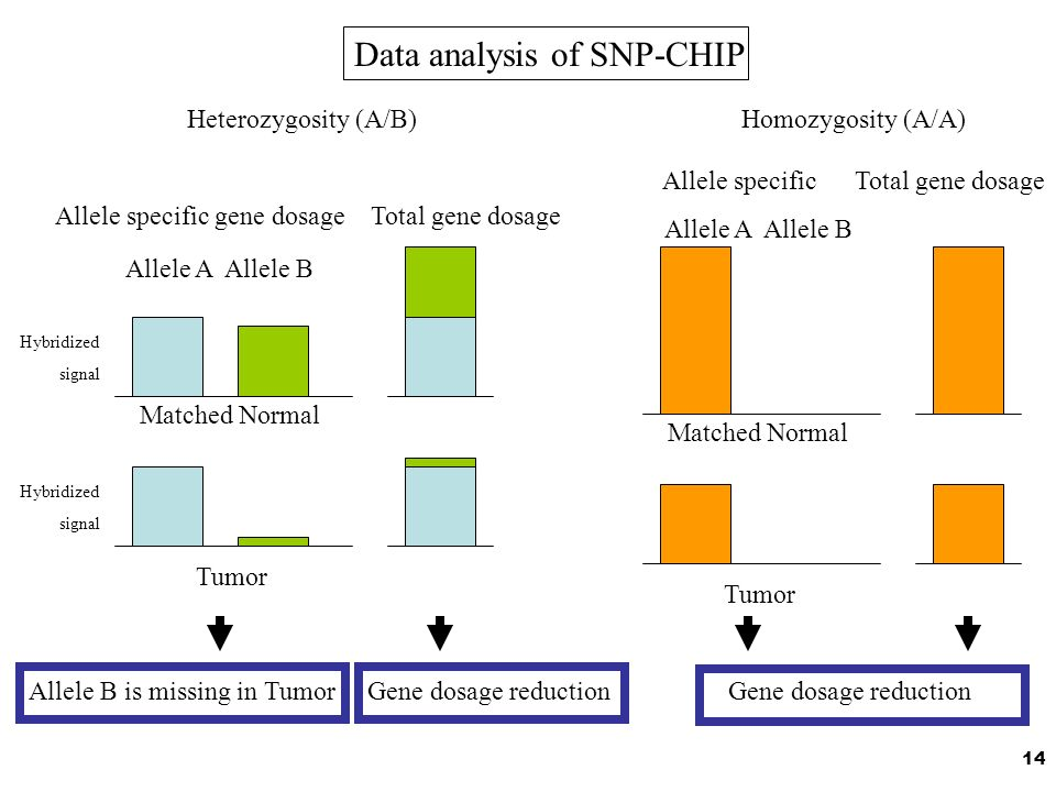 Data analysis of SNP-CHIP