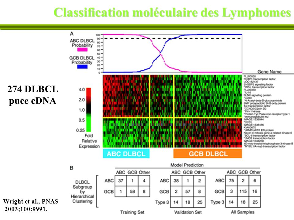 Classification moléculaire des Lymphomes