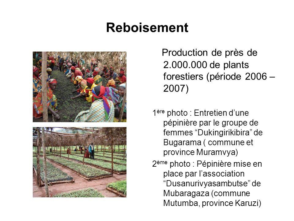 Reboisement Production de près de 2.000.000 de plants forestiers (période 2006 – 2007)