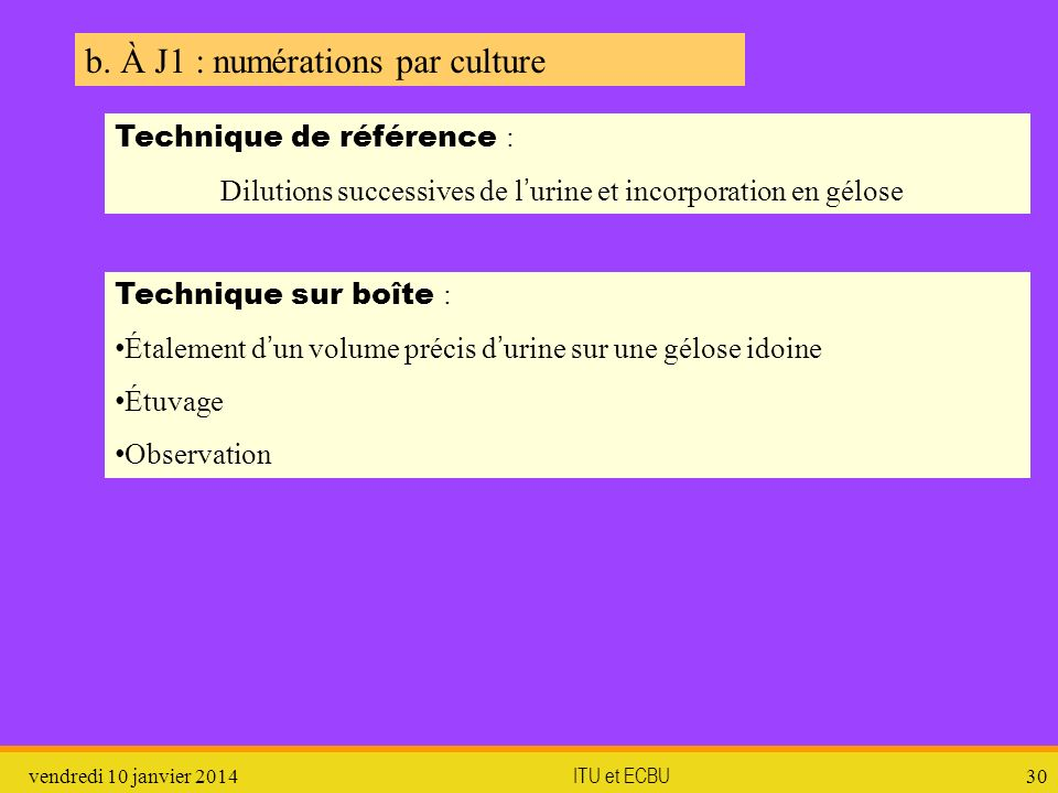 b. À J1 : numérations par culture