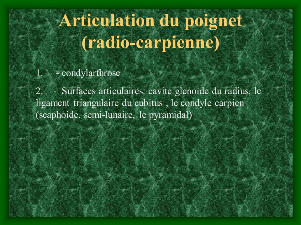 Articulation du poignet (radio-carpienne)