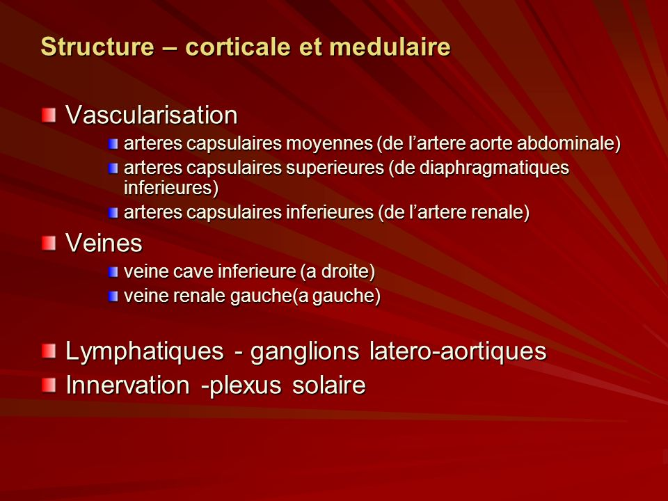 Structure – corticale et medulaire Vascularisation