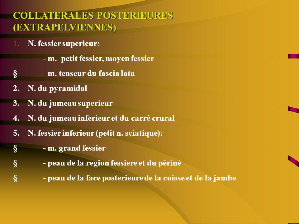 COLLATERALES POSTERIEURES (EXTRAPELVIENNES)