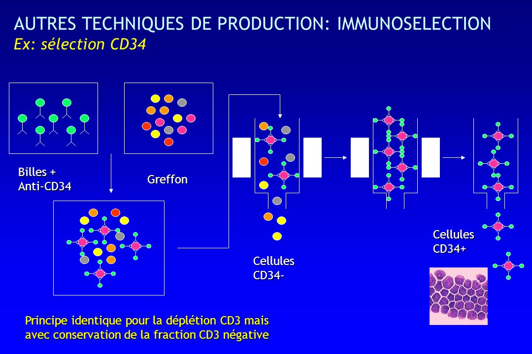 AUTRES TECHNIQUES DE PRODUCTION: IMMUNOSELECTION