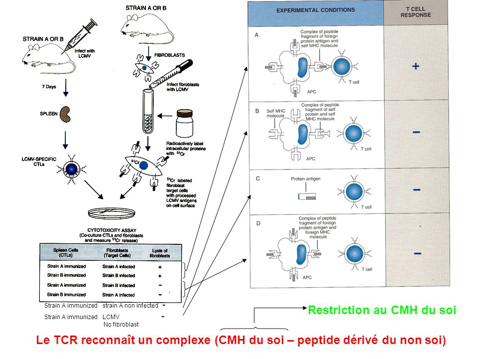 Restriction au CMH du soi