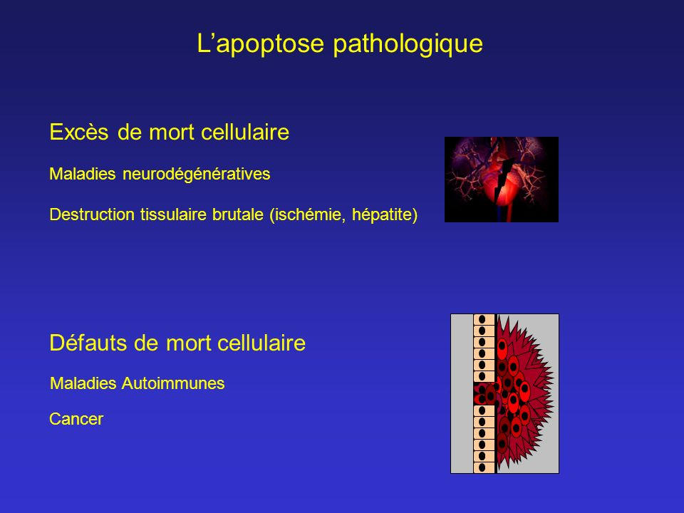 L'apoptose pathologique