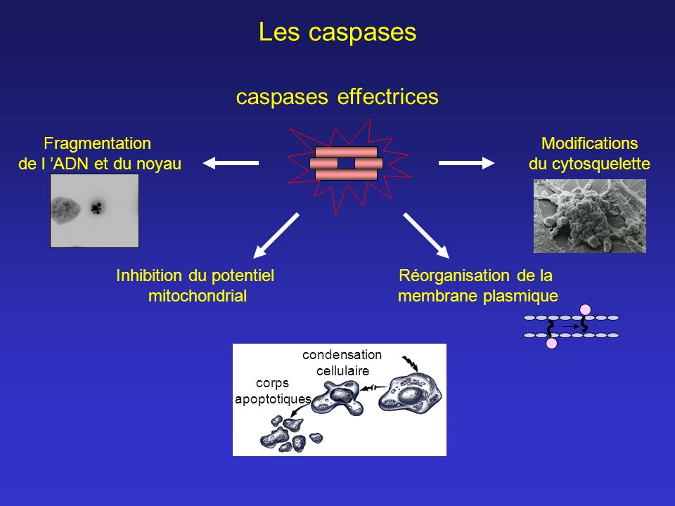 Inhibition du potentiel