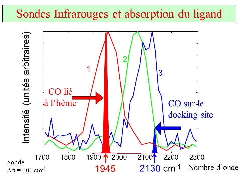 Sondes Infrarouges et absorption du ligand
