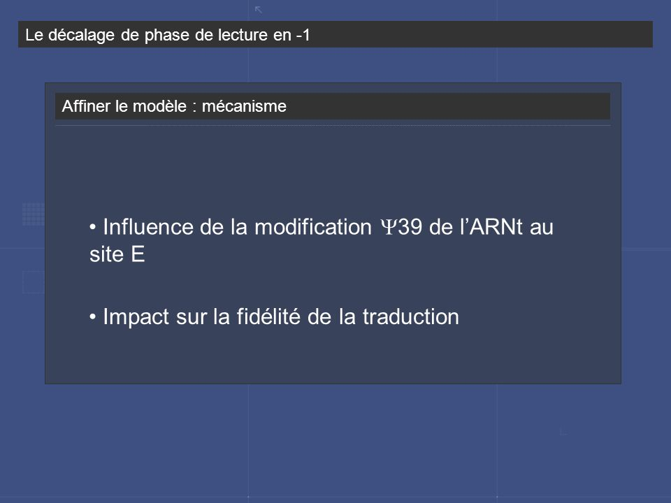 Influence de la modification Y39 de l'ARNt au site E