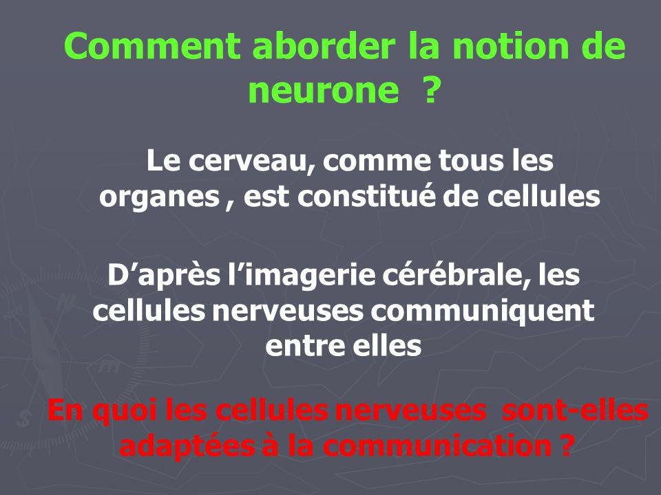 Comment aborder la notion de neurone