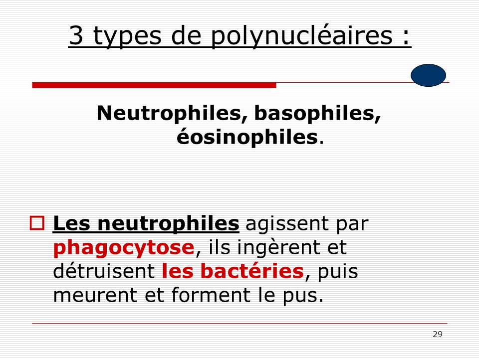 3 types de polynucléaires :