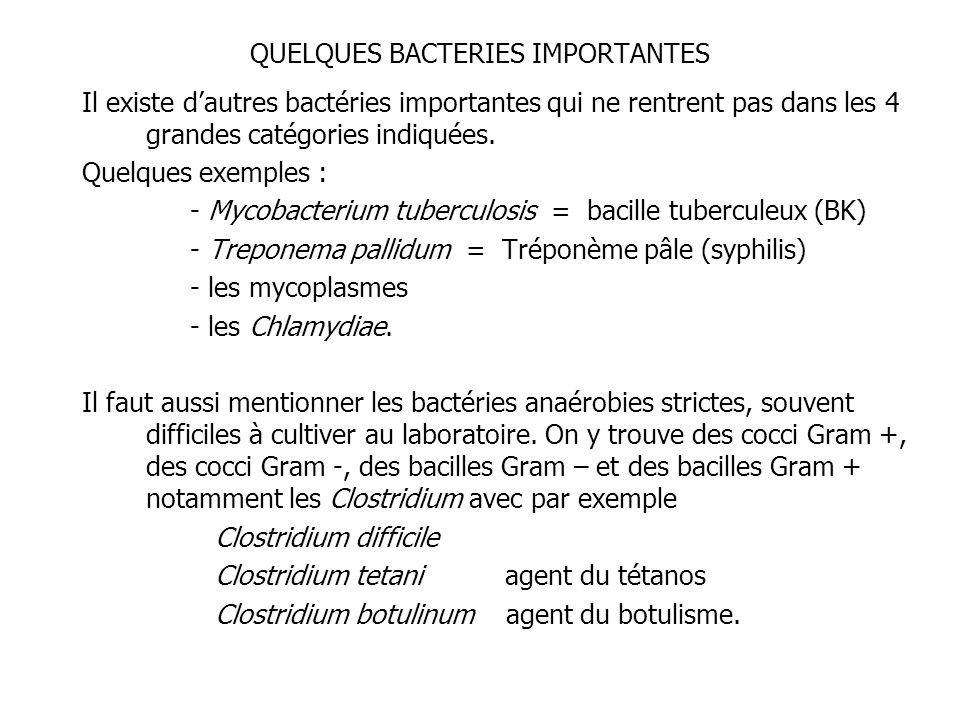 QUELQUES BACTERIES IMPORTANTES