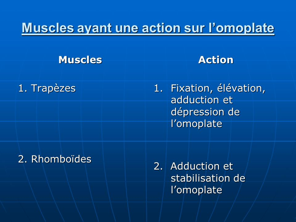 Muscles ayant une action sur l'omoplate