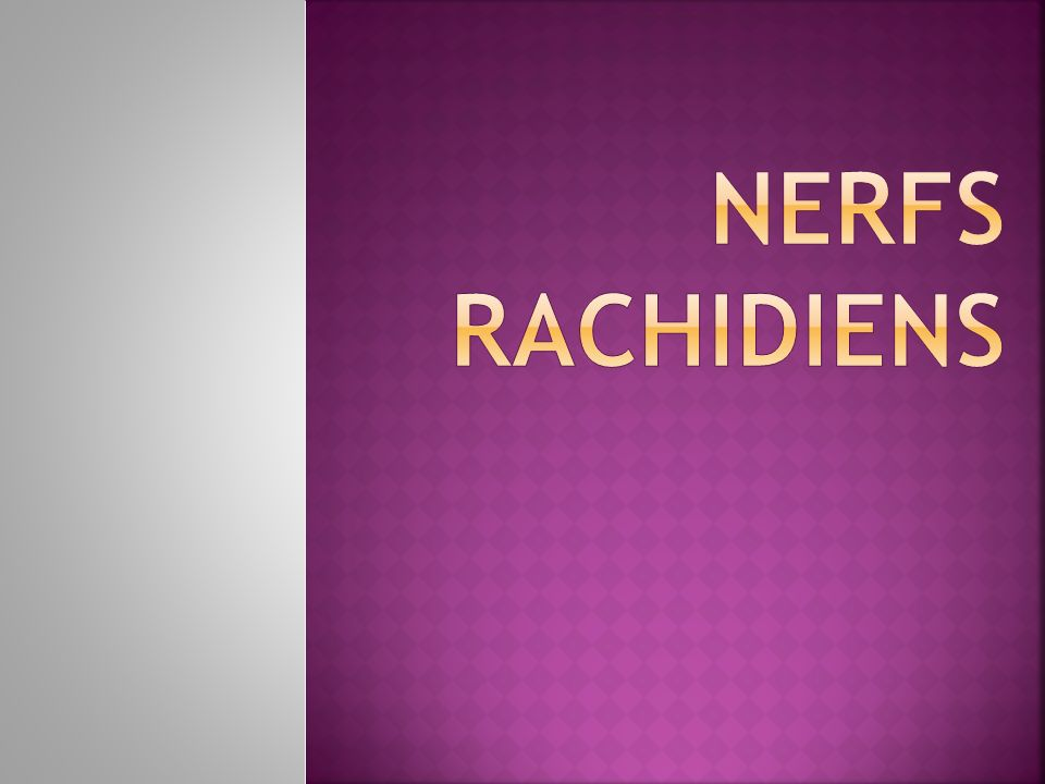 NERFS RACHIDIENS