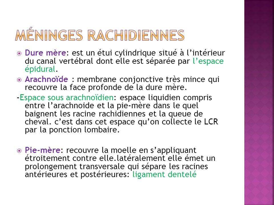 Méninges rachidiennes