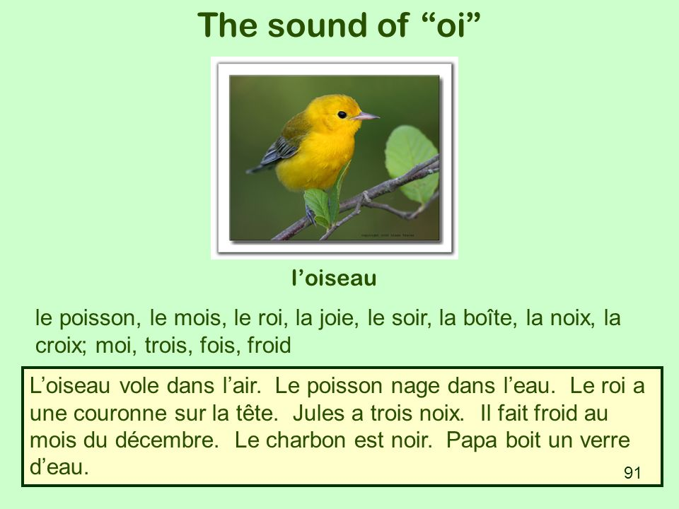 The sound of oi l'oiseau