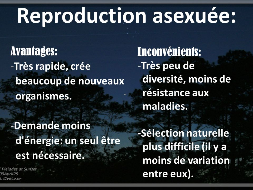 Reproduction asexuée: