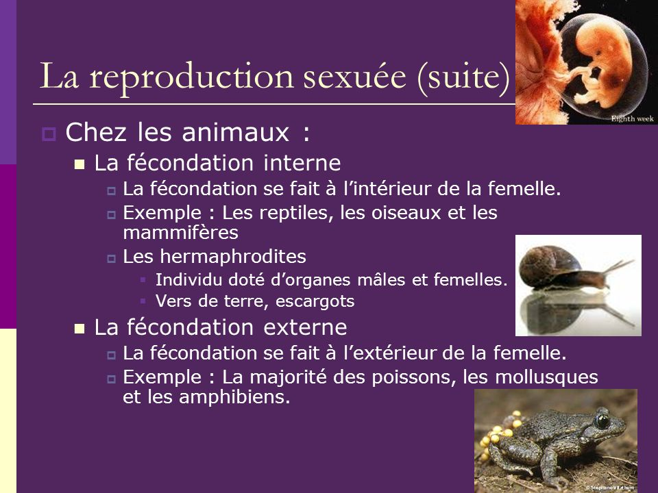 La reproduction sexuée (suite)