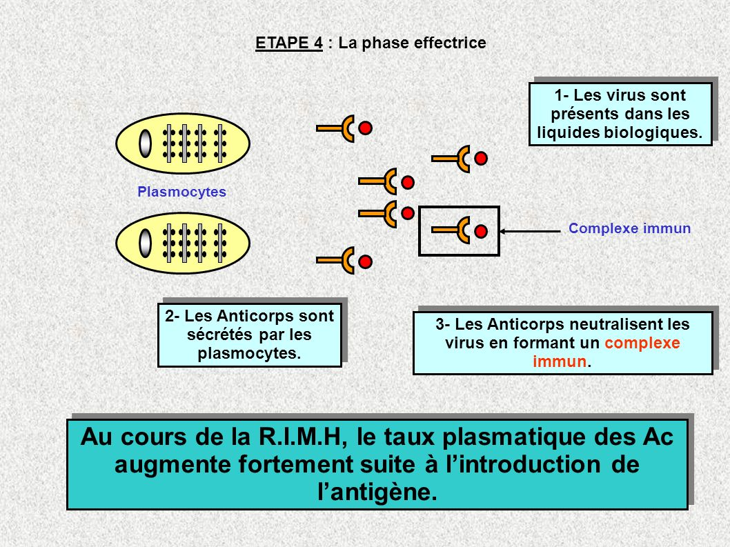 ETAPE 4 : La phase effectrice