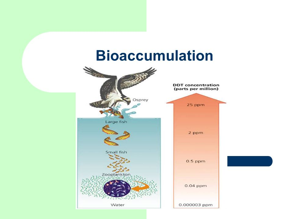 Bioaccumulation Image from
