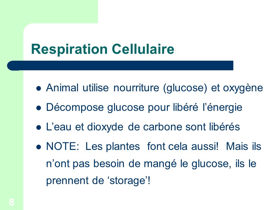 Respiration Cellulaire