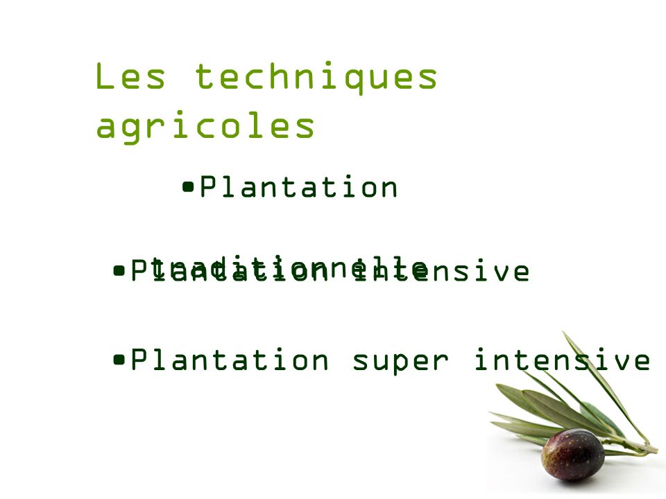 Plantation traditionnelle