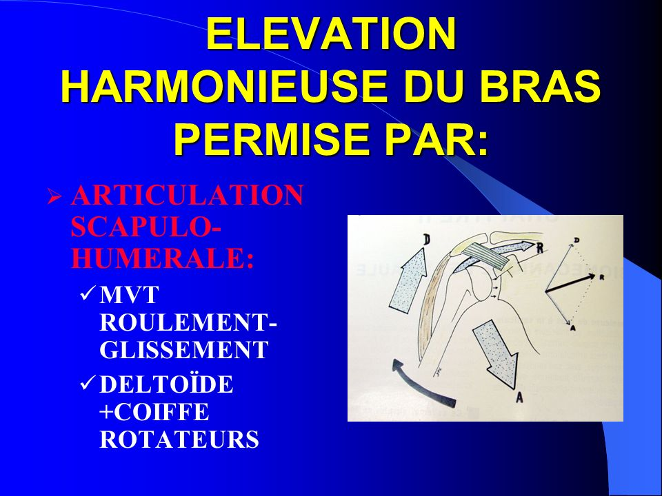ELEVATION HARMONIEUSE DU BRAS PERMISE PAR: