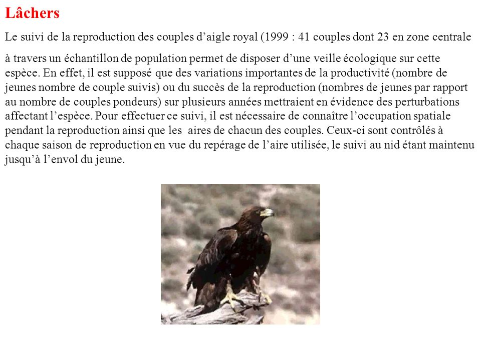 Lâchers Le suivi de la reproduction des couples d'aigle royal (1999 : 41 couples dont 23 en zone centrale.