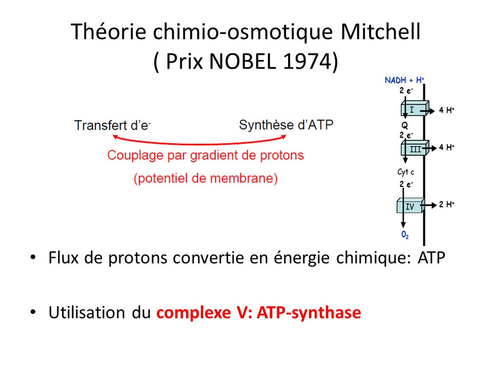 Théorie chimio-osmotique Mitchell ( Prix NOBEL 1974)
