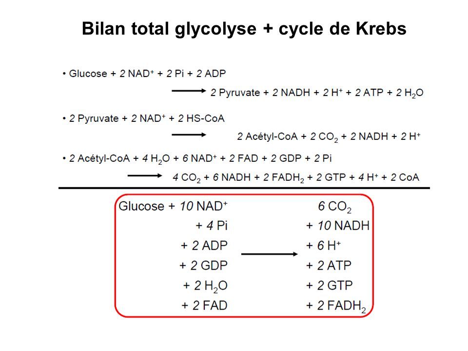 Bilan total glycolyse + cycle de Krebs