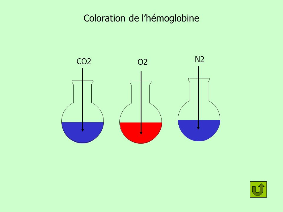 Coloration de l'hémoglobine