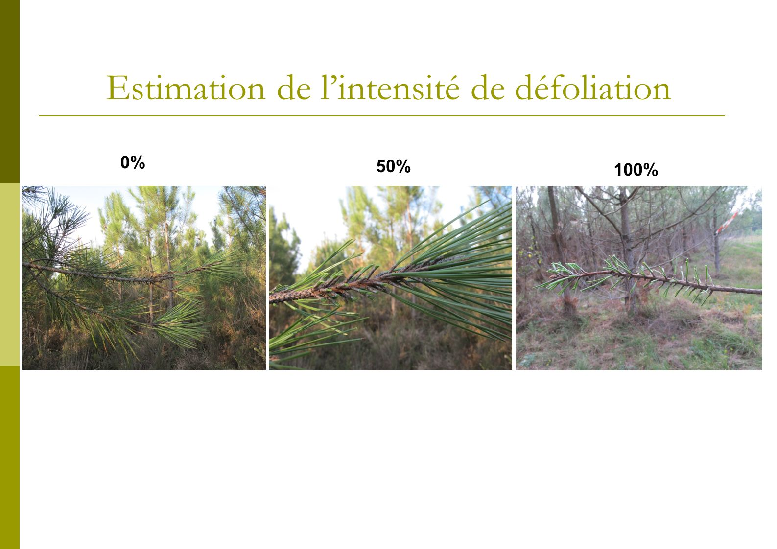 Estimation de l'intensité de défoliation