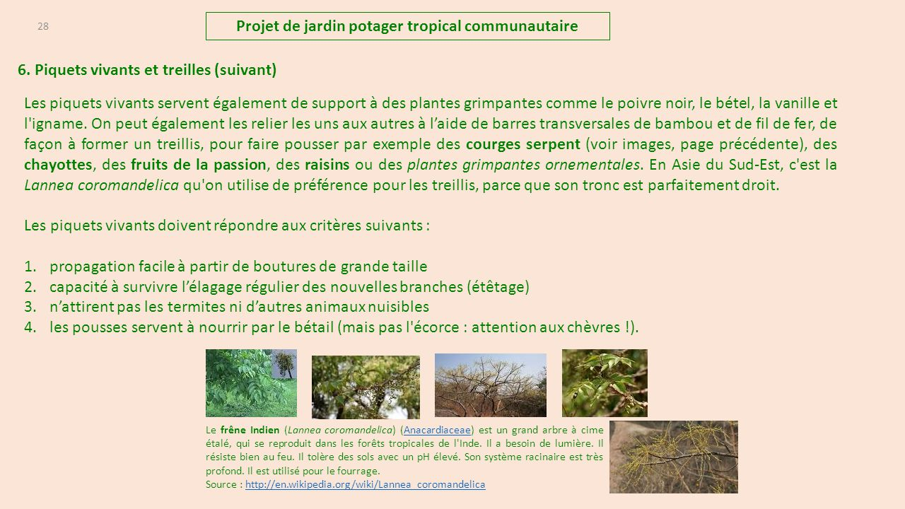 projet de jardins potagers tropicaux communautaire et. Black Bedroom Furniture Sets. Home Design Ideas