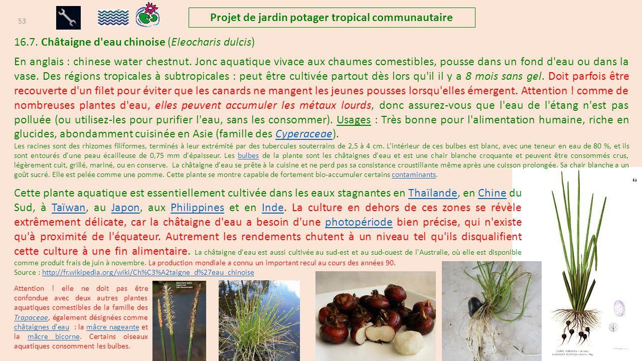 projet de jardins potagers tropicaux communautaire et familiaux ppt t l charger. Black Bedroom Furniture Sets. Home Design Ideas
