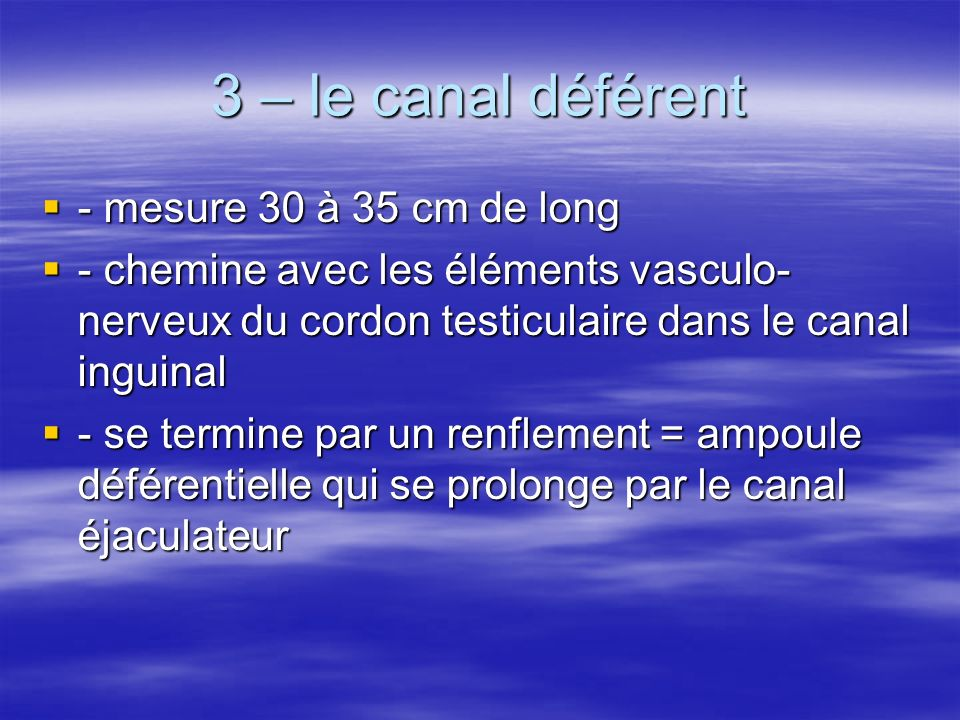 3 – le canal déférent - mesure 30 à 35 cm de long