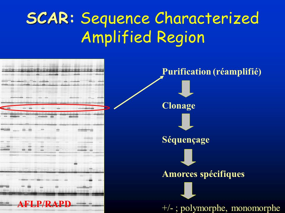 SCAR: Sequence Characterized Amplified Region