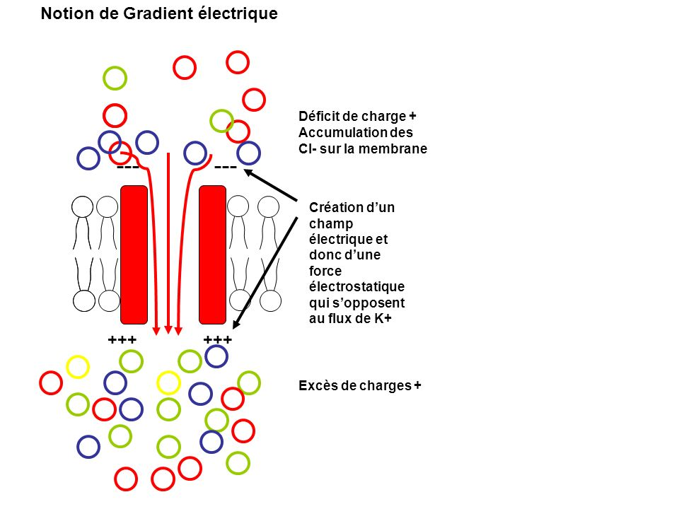 Notion de Gradient électrique Déficit de charge +