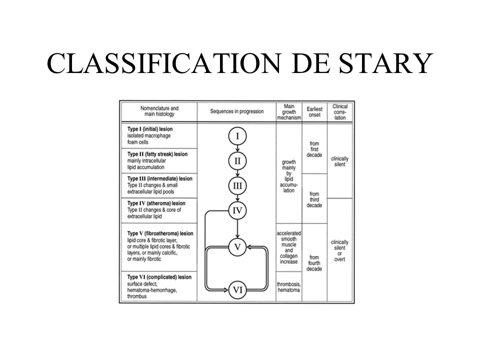 CLASSIFICATION DE STARY