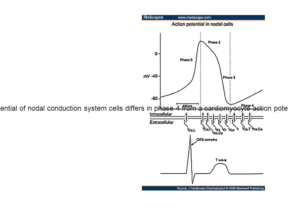 Action potential in nodal cells