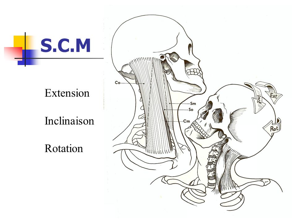 S.C.M Extension Inclinaison Rotation