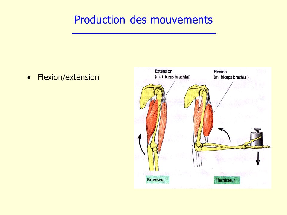 Production des mouvements