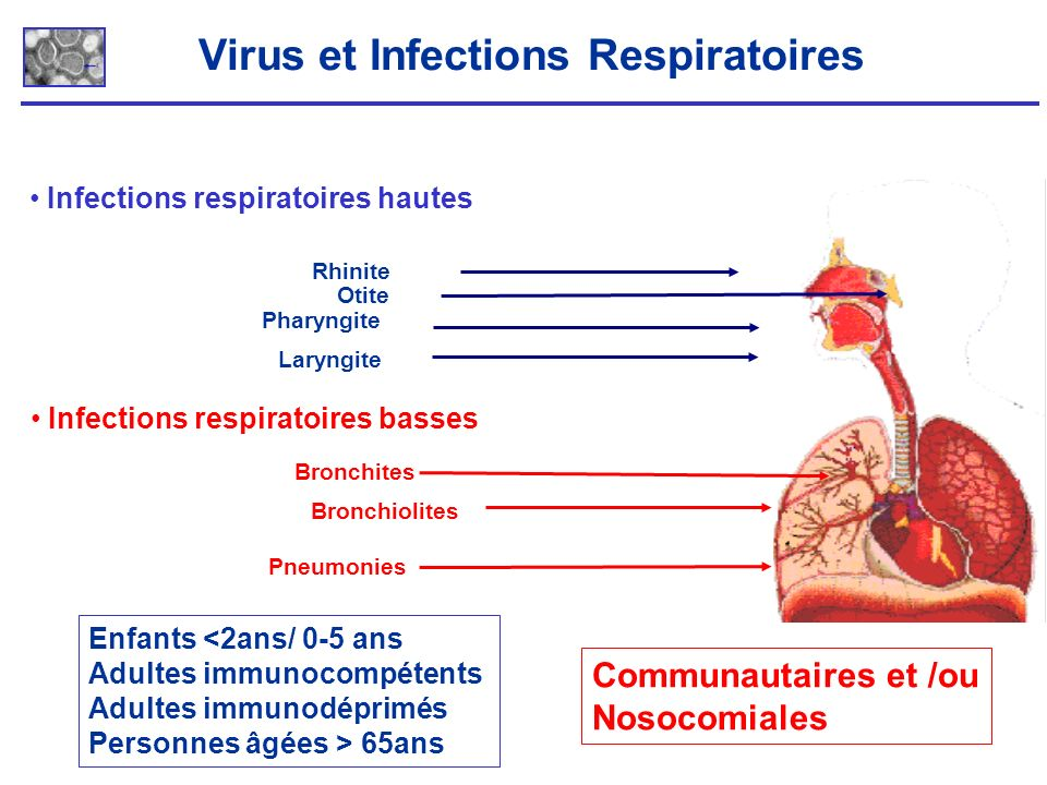 Virus et Infections Respiratoires