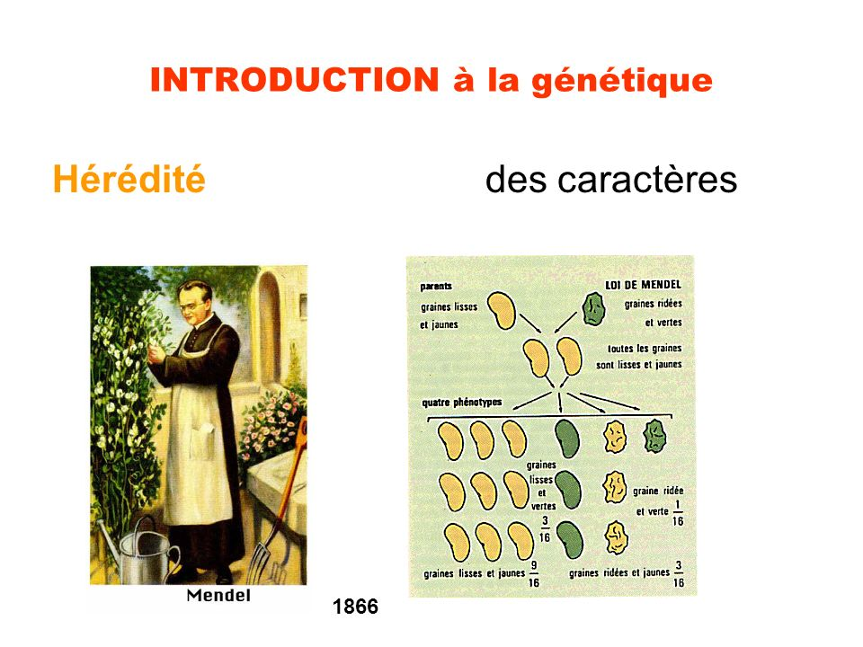 INTRODUCTION à la génétique