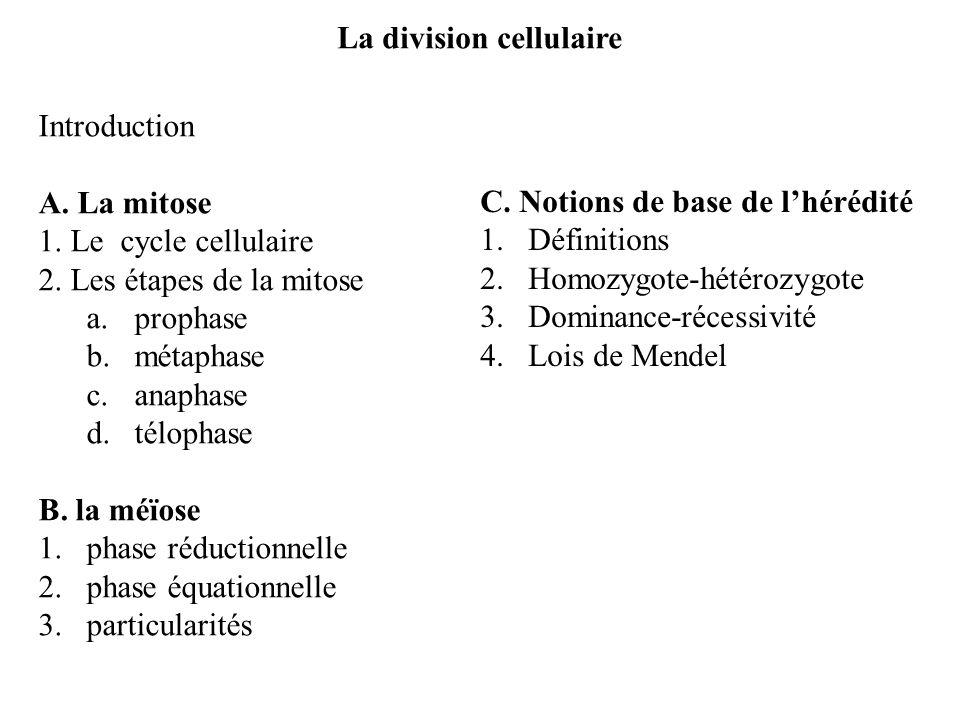 division équationnelle définition